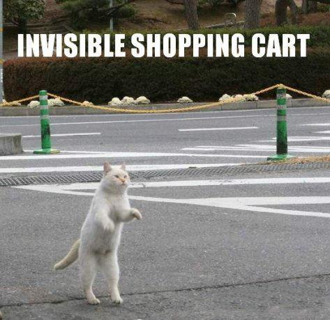 invisible shopping cart bike cat lolcat