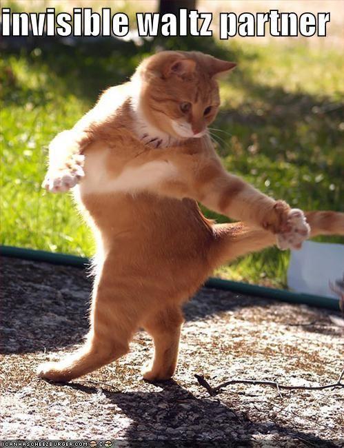 invisible wlatz partner lol cat lolcat meme