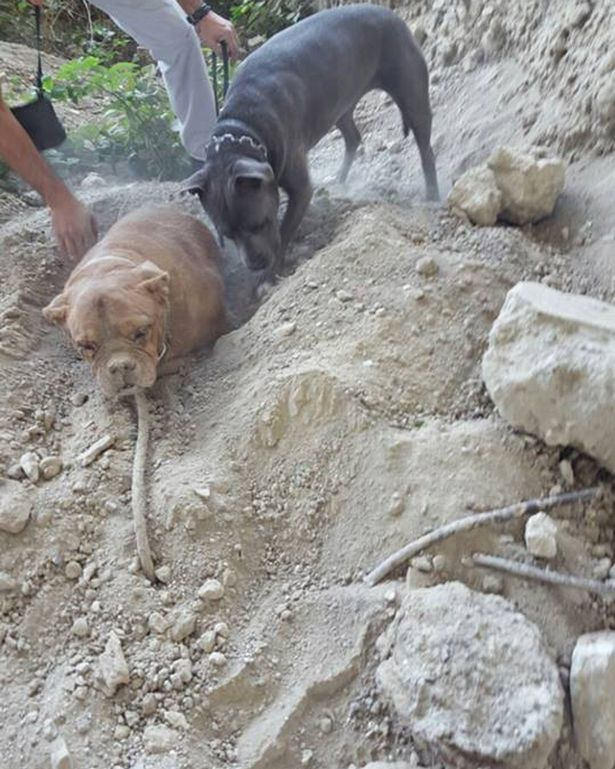 Outrage after dog 'buried alive' picture posted on Facebook