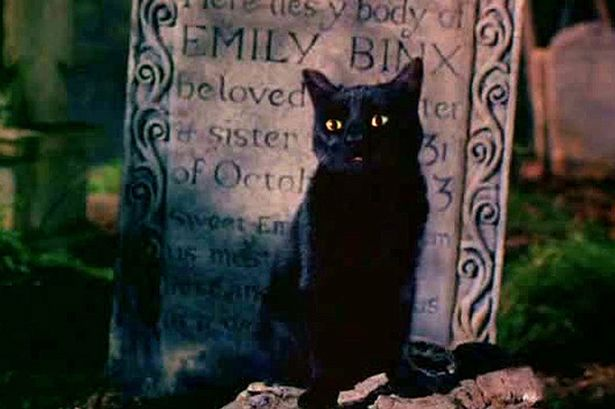 Image result for Binx - Hocus Pocus