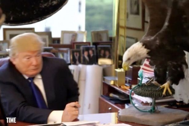 A bald eagle pecks at presidential candidate Donald Trump during a photo shoot for TIME magazine