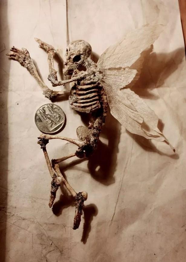 Bodies of strange creatures were found in a basement. Pictured - Homomimus Alatus