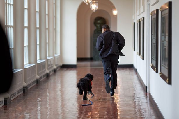 "President Barack Obama runs down the East Colonnade with family dog ""Bo"""