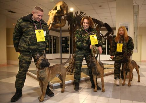 The dogs will be assigned to the police and the FSB secret service in Yakutia (Image: Mirror)