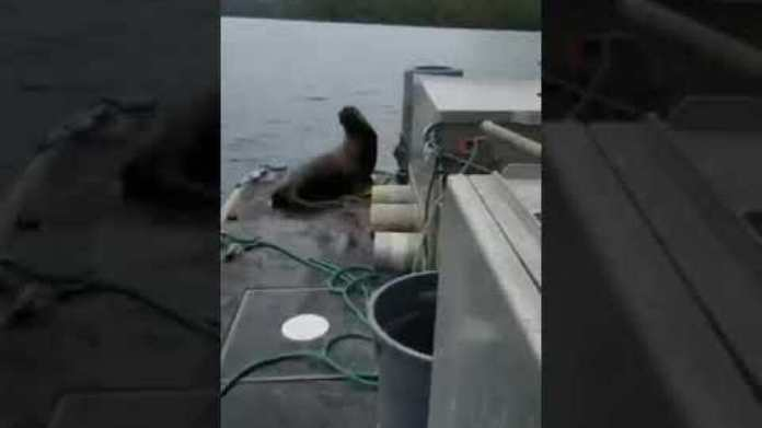 woman kicks sea lion off boat into orca- infested water
