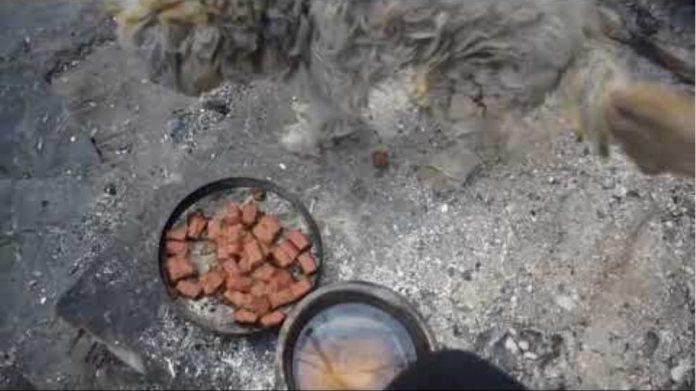 Βρήκαν σκύλο ζωντανό σε καμένο σπίτι στο  Μάτι Αττικής 26-7-2018
