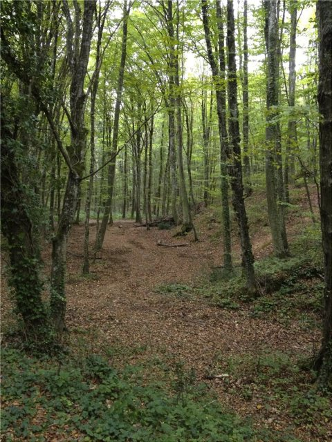 belgrad_forest
