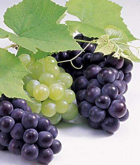 葡萄發霉了還能吃嗎 葡萄變軟了還能吃嗎 - 壹讀