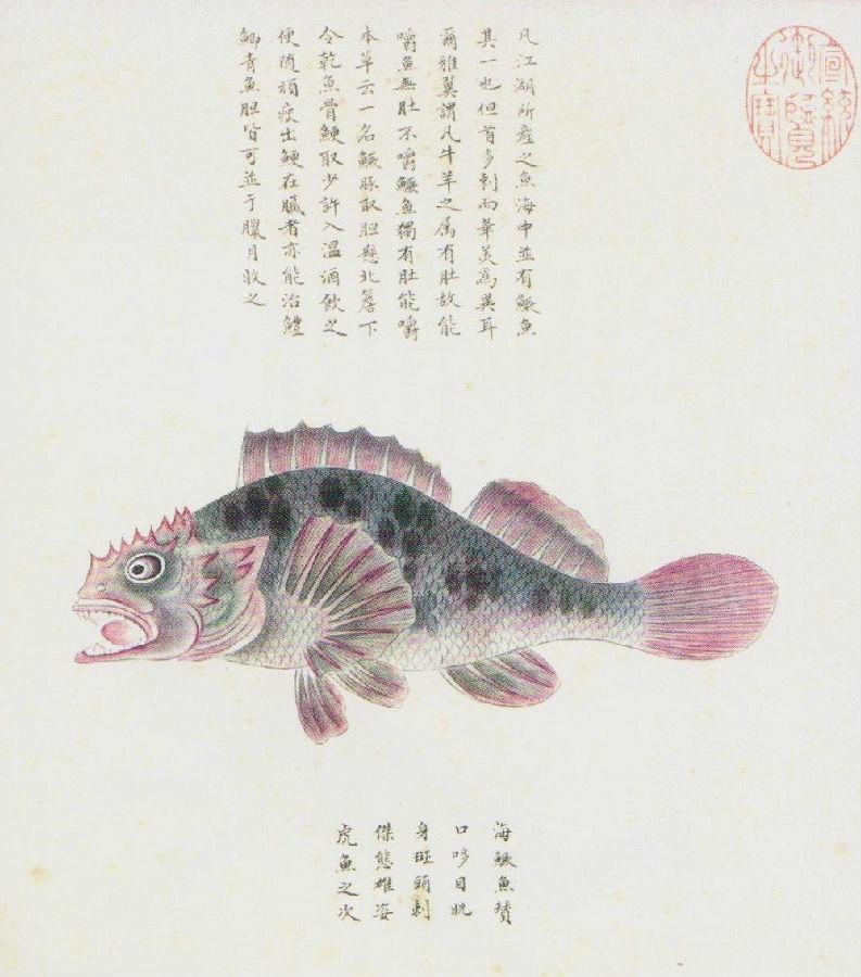 中國古代海洋生物圖譜--《海錯圖》欣賞 - 壹讀