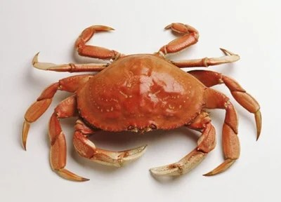吃完螃蟹不能吃的13種食物 - 壹讀