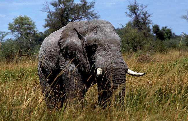 大象是怎麼睡覺的? - 壹讀