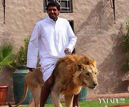 土豪家養獅子出逃 差點把人吃掉養獅子違法 - 壹讀