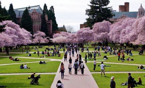 矽谷知名企業最青睞的20所大學!讓你大跌眼鏡! - 壹讀