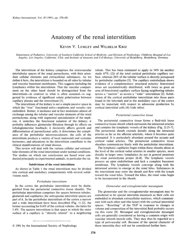 (PDF) Anatomy of the renal interstitium