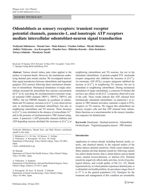 (PDF) Odontoblasts as sensory receptors: transient ...