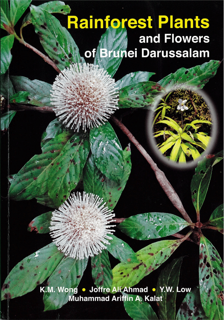 Out of the plants of the rainforest came cures and treatments for leukemia, breast cancer, high blood pressure, and asthma. Pdf Rainforest Plants And Flowers Of Brunei Darussalam