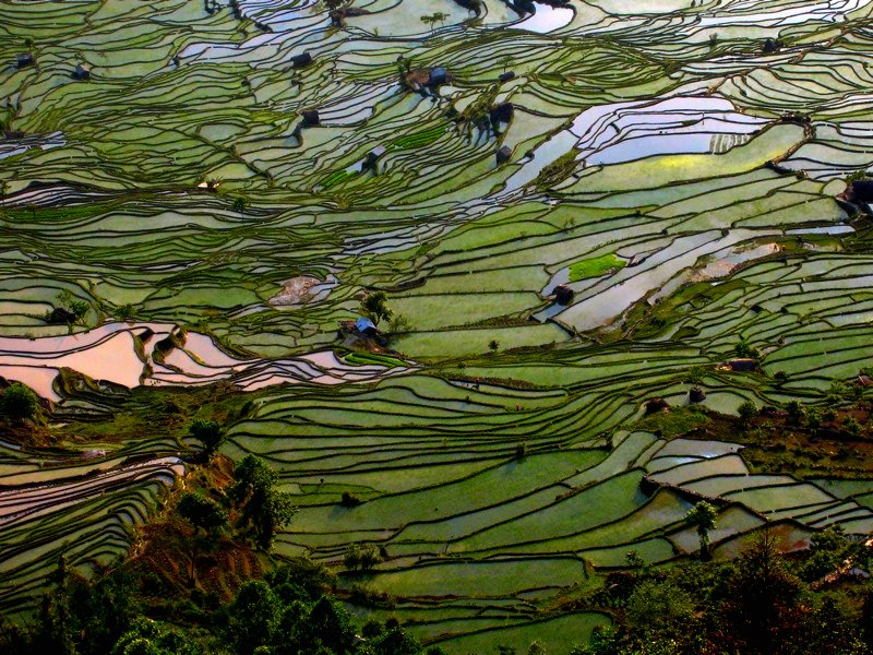 Ricefields in Yuanyang