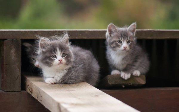 Обои усы, взгляд, коты, кошки, котята для рабочего стола ...
