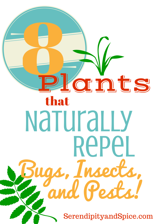 plants to repel bugs