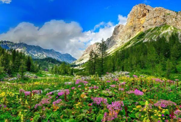 Зеленая трава цветы лес скалы горы картинки на