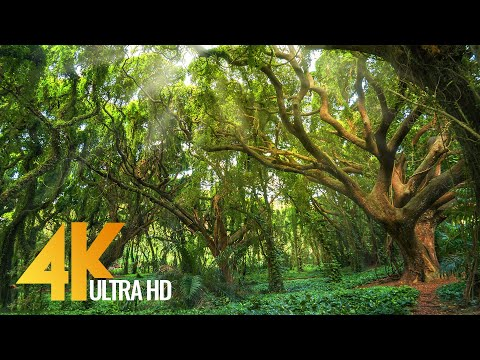 Most Beautiful USA Forests in 4K - Relaxation Video (Calming Music mixed with Nature Sounds) 4 HOURS