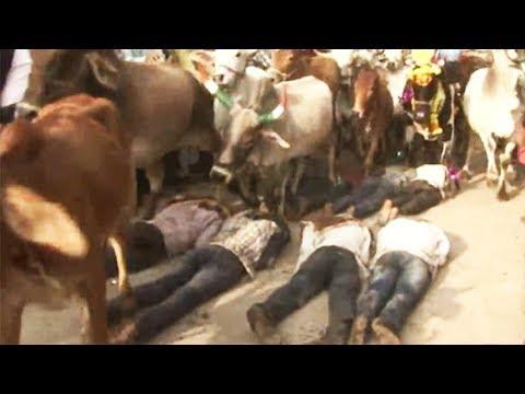 Diwali Cattle Stampede | Bizarre Diwali Tradition