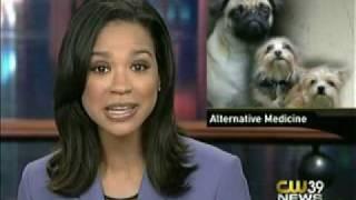 picture of Animal Acupuncturist