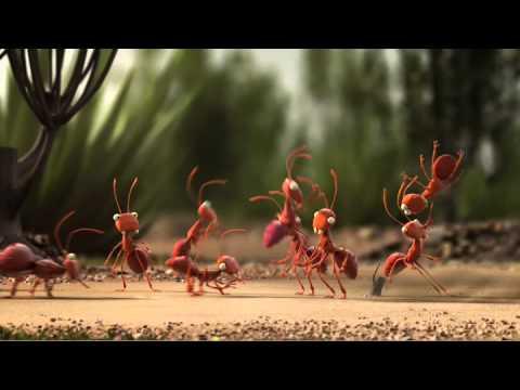 De Lijn Mieren Youtube
