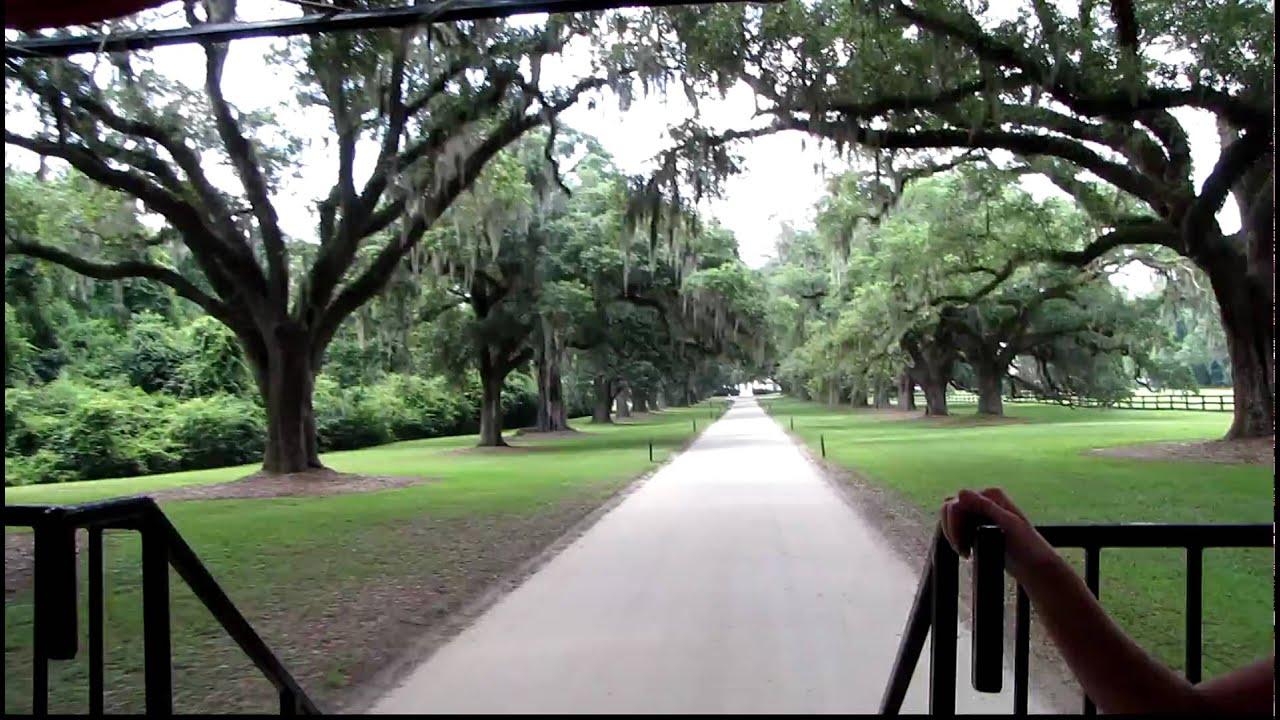 Boone Hall Plantation Oak Trees Charleston Sc High
