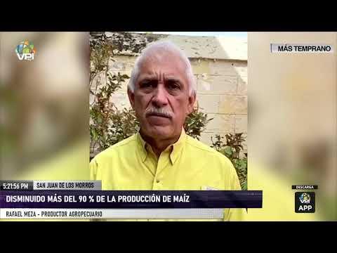 Guárico - Producción de maíz disminuyó de forma drástica - VPItv