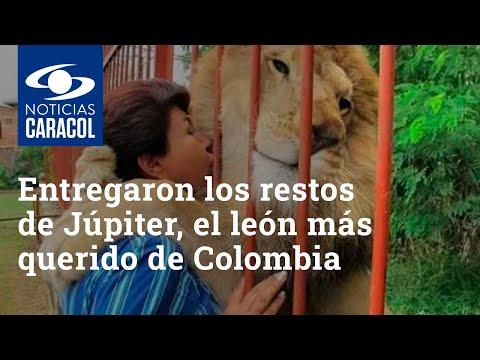 En Cali entregaron los restos de Júpiter, el león más querido de Colombia