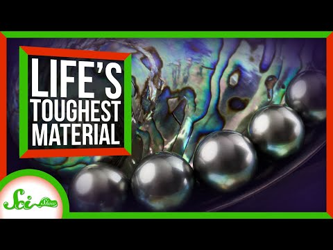 The Secrets of Life's Toughest Material