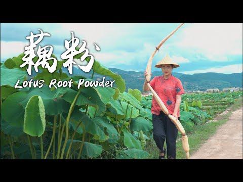 藕粉———盛夏荷塘里的营养美味【滇西小哥】