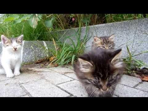 3 Kittens Attack Camera