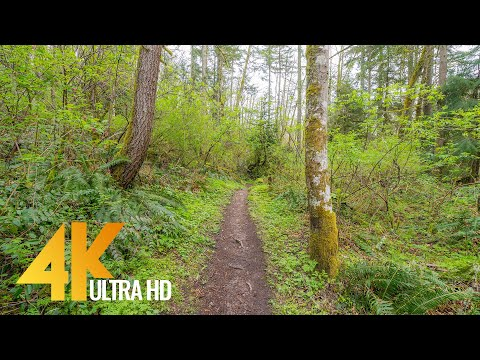 4K Forest Walk along Licorice Fern Trail, Issaquah Area - Short Version with Nature Sounds