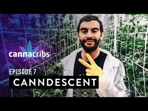 Most Expensive Cannabis in USA, Luxury Brand: Canndescent, Episode 7, California
