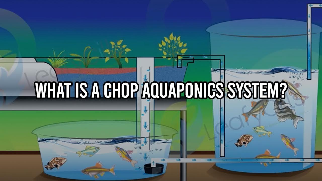 CHOP2 Aquaponic System