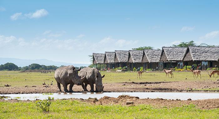 Porino Rhino Camp, Ol Pejeta Conservancy