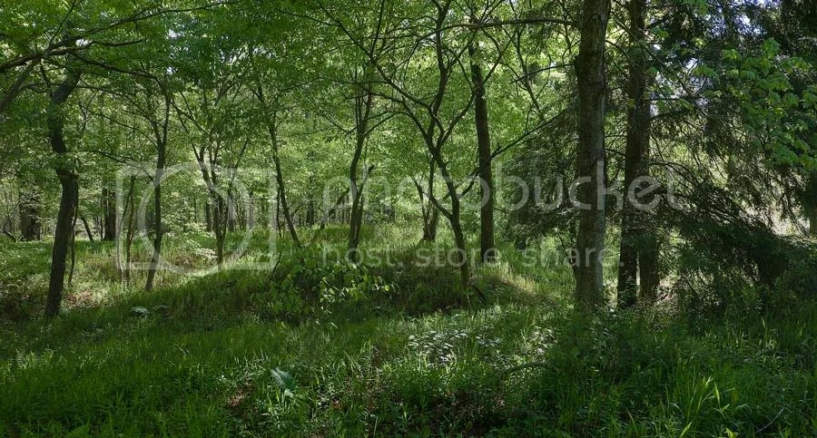 Spring Forest Meadow