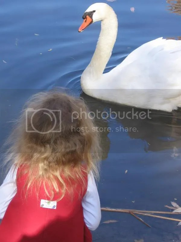 Grace and the Swan