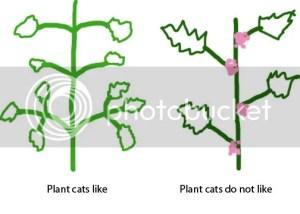 Catnip gone rogue? • HelpfulGardener Gardening Forum