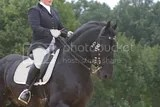 dressage,friesian horse
