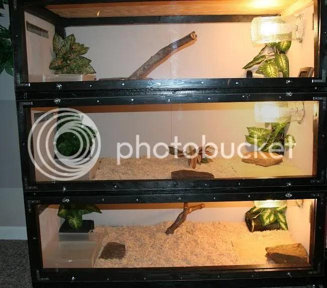 Critters Small Terrarium