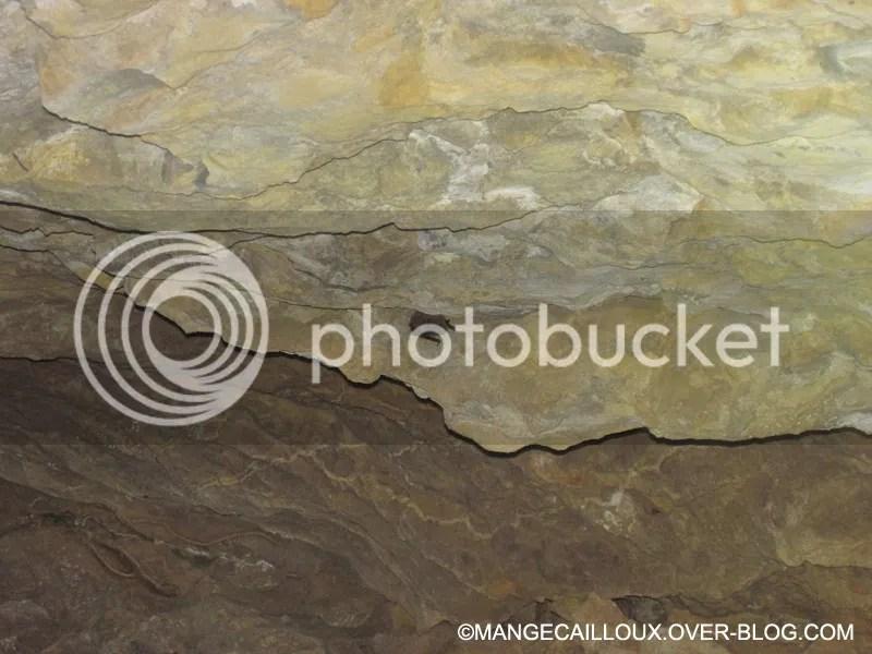 grotte-de-l-ours-4350.jpg