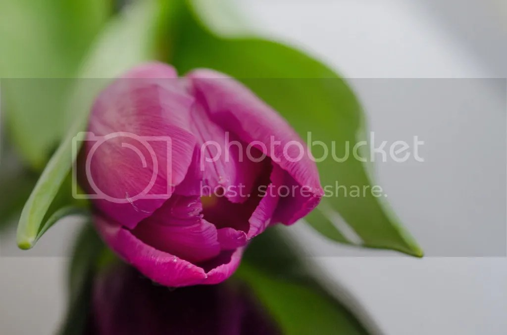 photo nature-purple-garden-flower_zpsyy7irjua.jpg