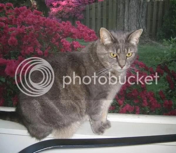 Maddie on the porch