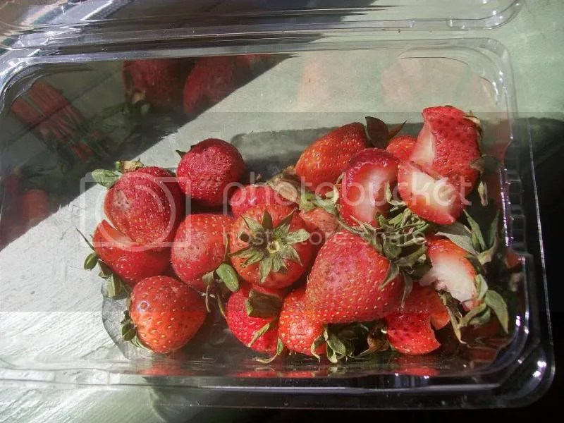 Rotten Organic Strawberries