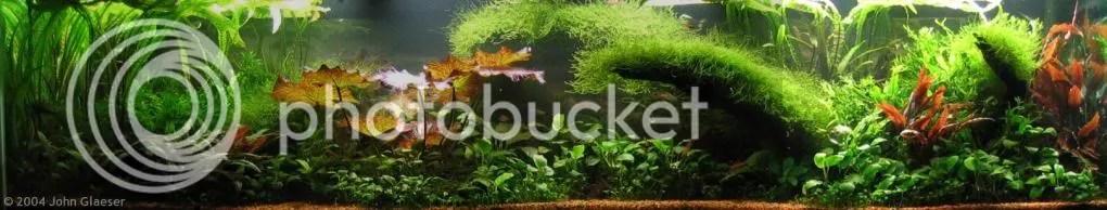 Rumah Aquascape | aquascape, akuarium, aquarium, tanaman ...