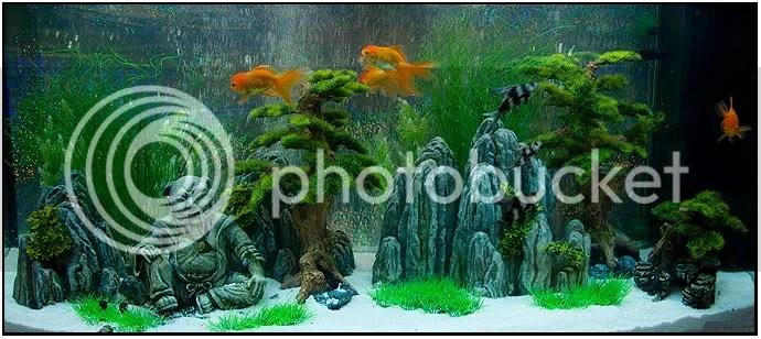 Decoracion Zen Acuario ~ Rumah Aquascape  aquascape, akuarium, aquarium, tanaman air