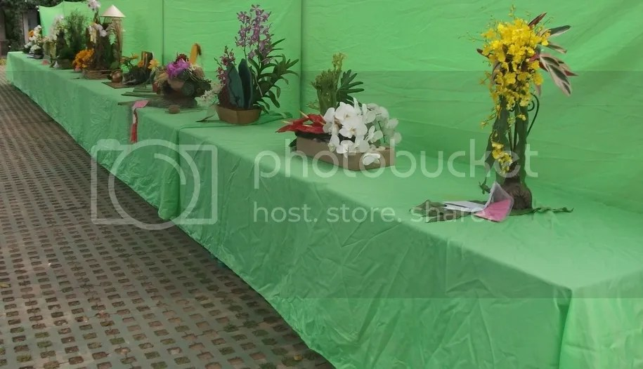 Winners Of Freestyle Flower Arrangement Collectors Connection